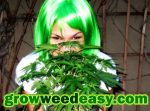 grow-weed-easy-nebula