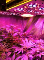 LED Grow Lights HQ