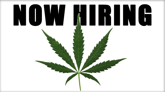 Finding a Chronic Job in the Cannabis Industry