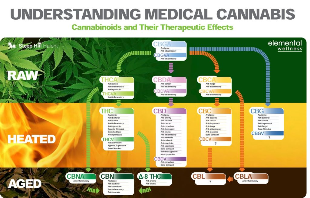 Cannabis Weed Infographic