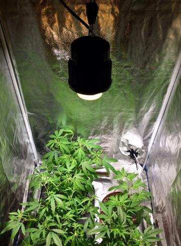 50 watt COB grow light