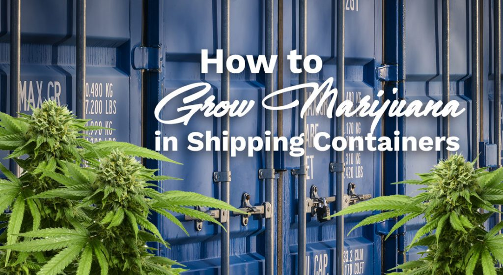 shipping container cannabis