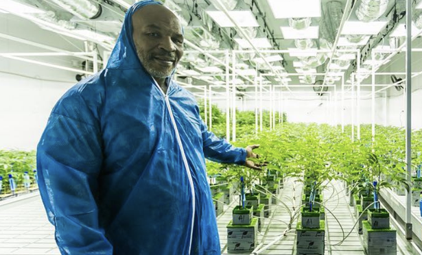 Mike Tyson and His Cannabis Ranch That Transforms How People Enjoy Marijuana
