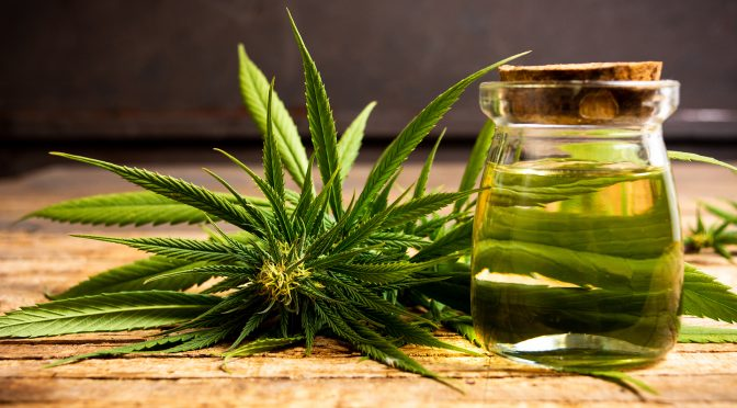 The Powerful Health Benefits of CBD Oil