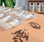 Seeds from Marijuana Seed Breeders